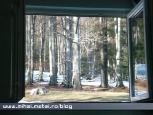 Privelişte pe geamul din spate